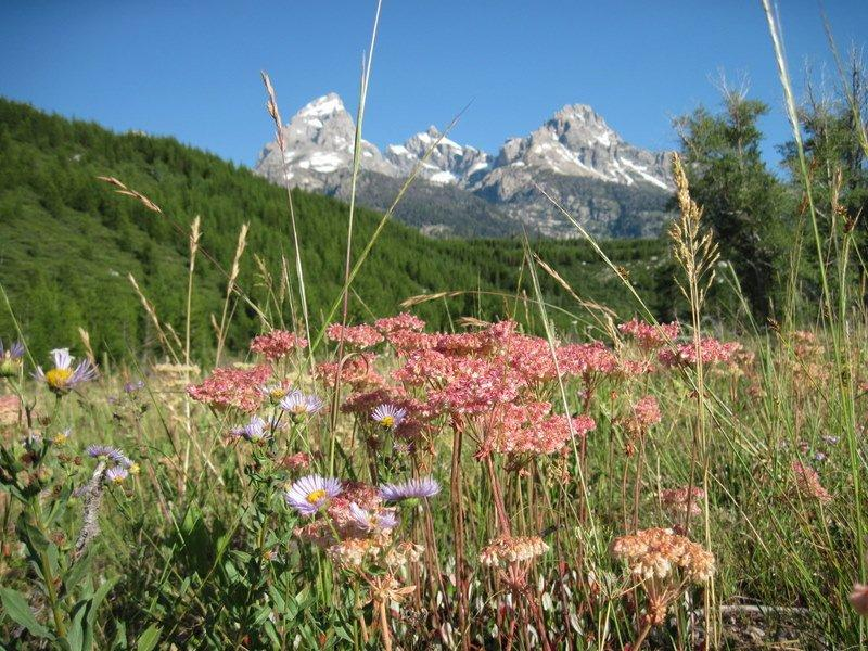 alpine-climbers-view-from-cabin-grand-tetons-8-6-2011-00