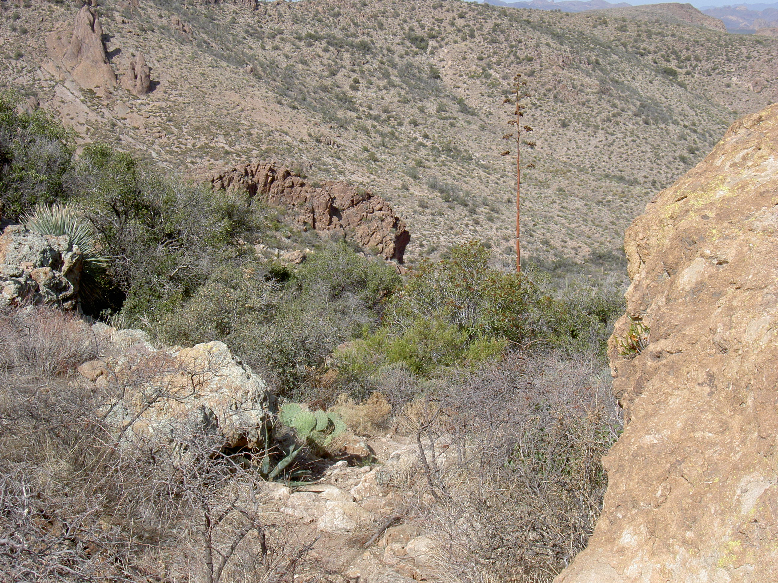superstition-mountains-027