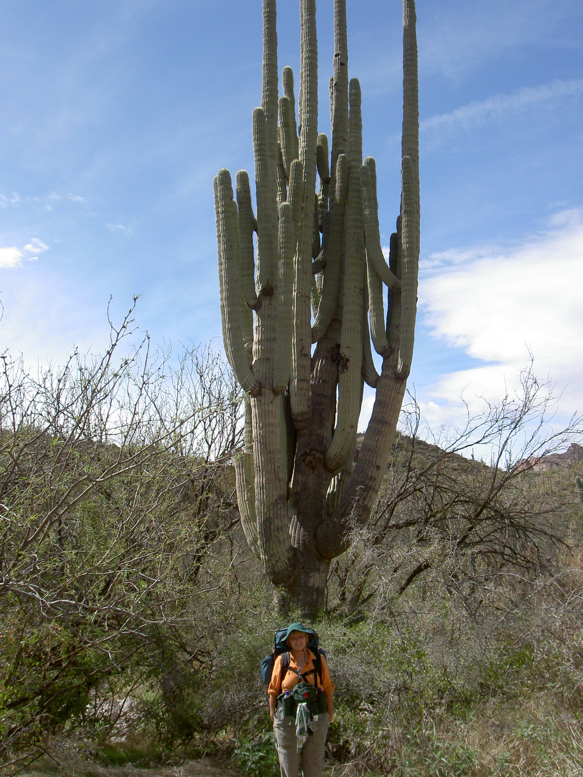 superstition-mountains-060