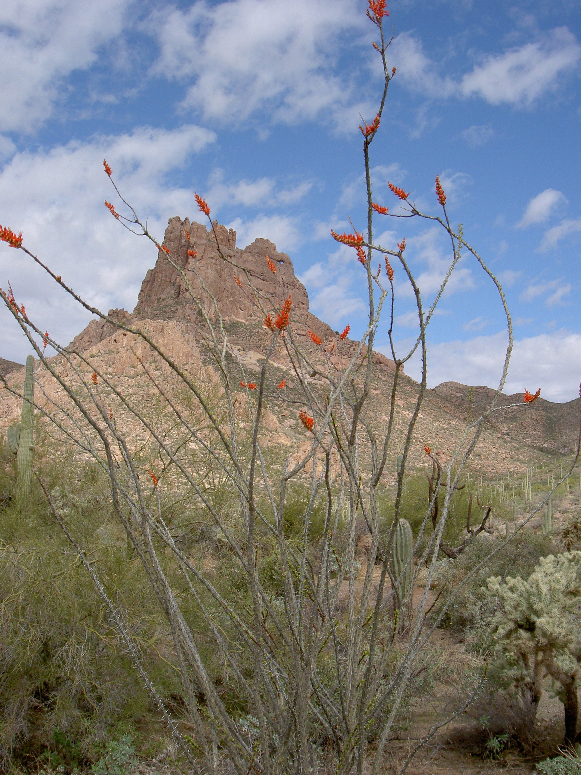 superstition-mountains-074