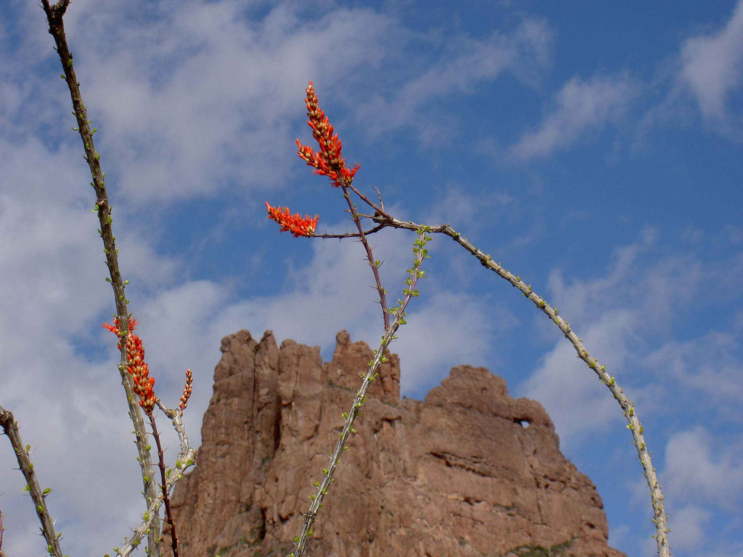 superstition-mountains-076