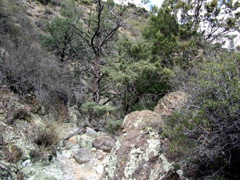 rock-creek-miles-ranch-wildcat-2-17-11-009