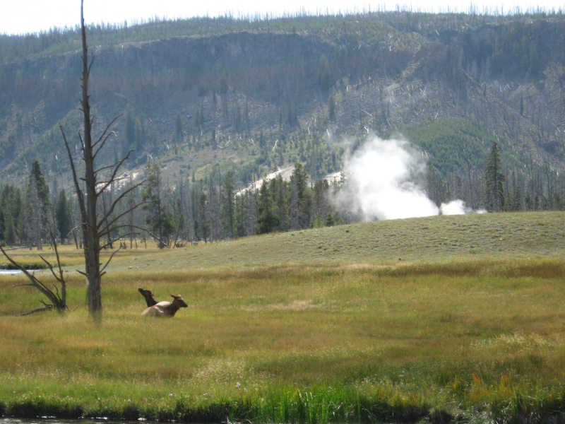 connie-aug-2007-yellowstone-042