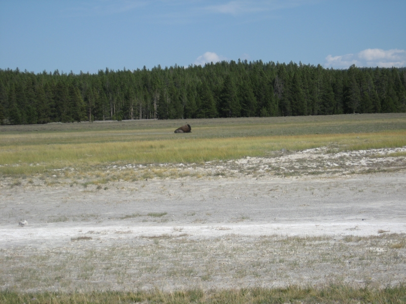 connie-aug-2007-yellowstone-043