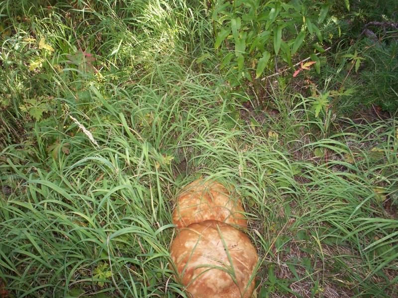 june-aug-2007-yellowstone-044