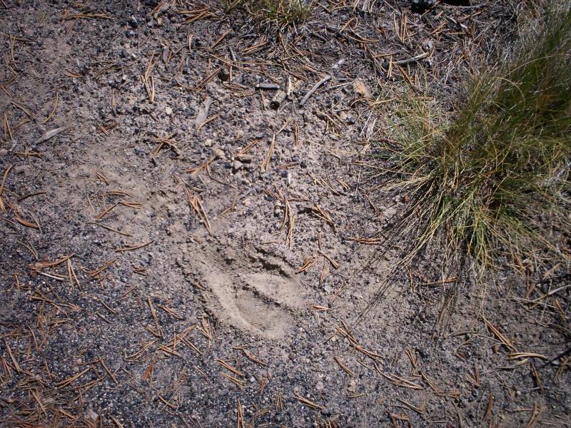 june-aug-2007-yellowstone-089