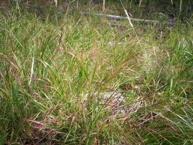 june-aug-2007-yellowstone-119